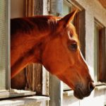 horse-1444961_1280