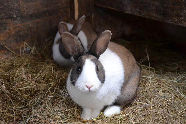 rabbit-966648_640